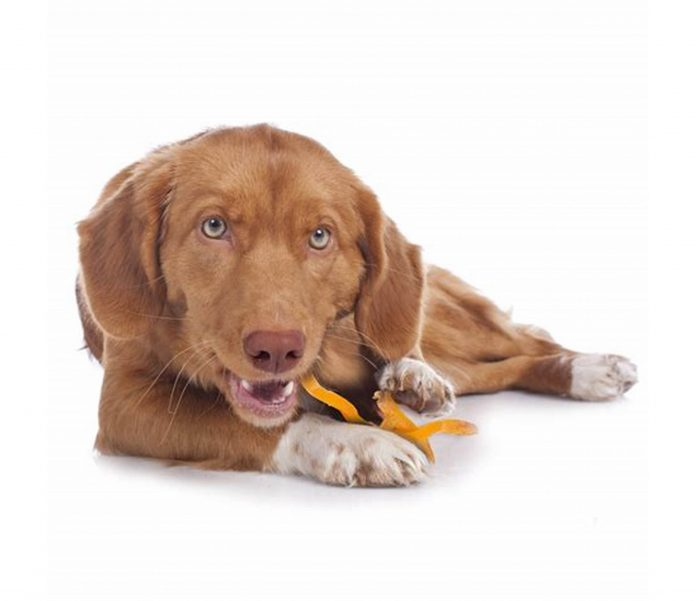 Promoting the Use and Benefits of CBD Oil for Dogs